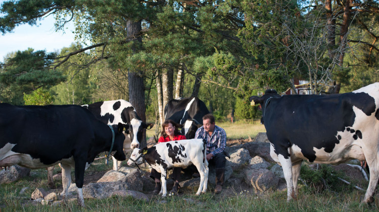 alandsmejeriet maatila